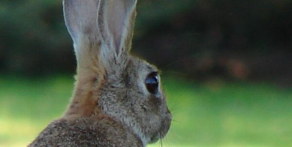 Bunny by MasterUK
