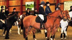 Buck screening for horses