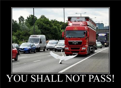 LOTR Meme Swan